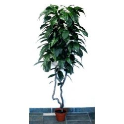 Citrom fa műnövény 180 cm