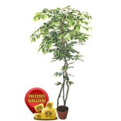 Tarka Fikusz fa műnövény 150 cm