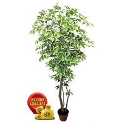 Tarka Fikusz fa műnövény 180 cm