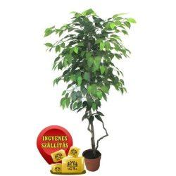 Zöld fikusz fa műnövény 120 cm