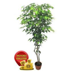 Zöld fikusz fa műnövény 150 cm